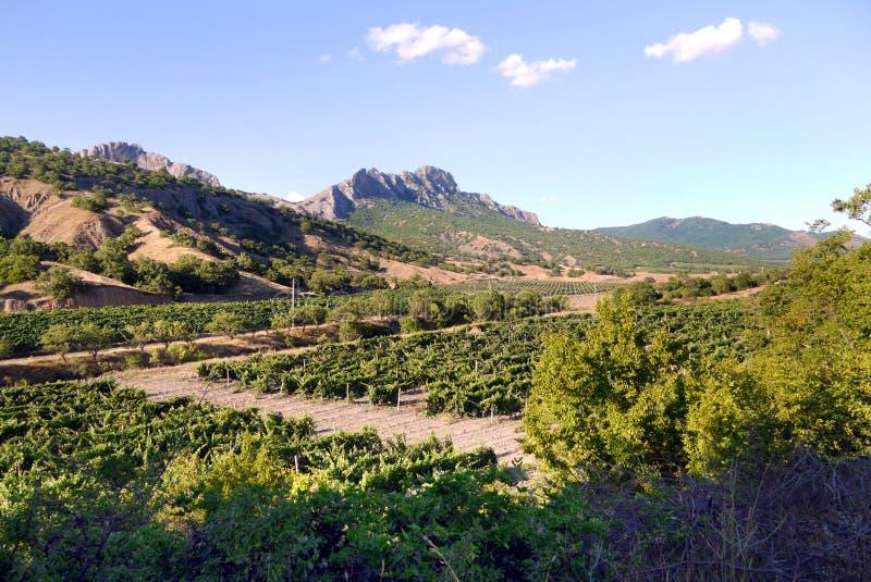 Wijnstokaanplantingen op de achtergrond van de Krimbergen stock foto