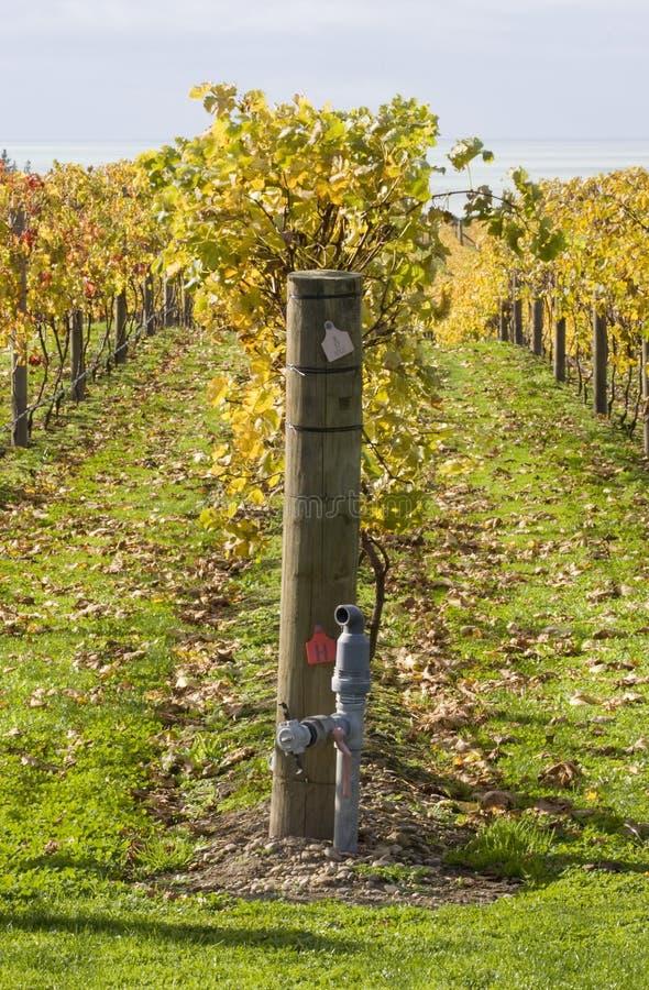 Wijnstokken 05 van de herfst stock fotografie