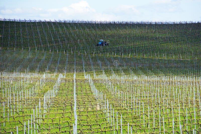 Wijnstokken die op het groeien in Australië met de landbouw van tractor, wolken, schaduwen en hemel op de achtergrond worden voor royalty-vrije stock afbeeldingen