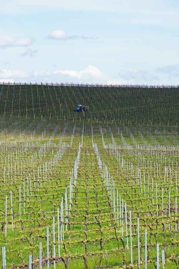 Wijnstokken die op het groeien in Australië met de landbouw van tractor, wolken, schaduwen en hemel op de achtergrond worden voor stock afbeeldingen