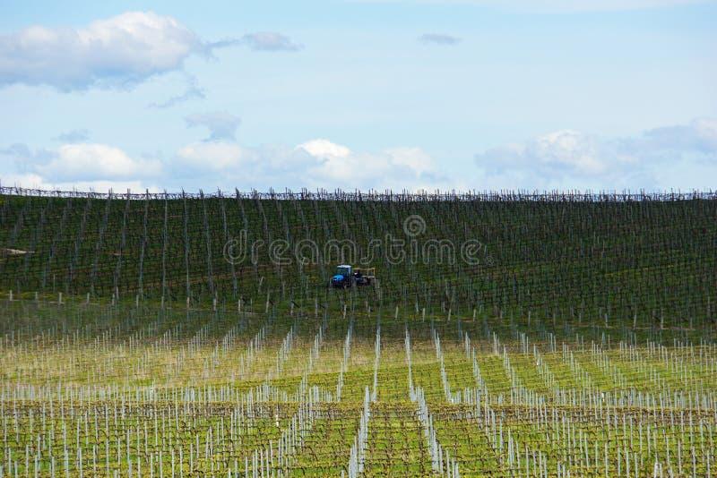 Wijnstokken die op het groeien in Australië met de landbouw van tractor, wolken, schaduwen en hemel op de achtergrond worden voor royalty-vrije stock fotografie