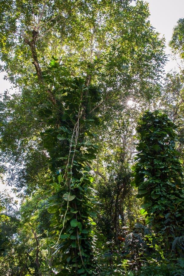 Wijnstokken en bomen royalty-vrije stock foto