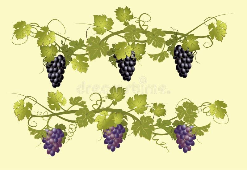 Wijnstokken met bossen van druiven in uitstekende stijl royalty-vrije stock fotografie