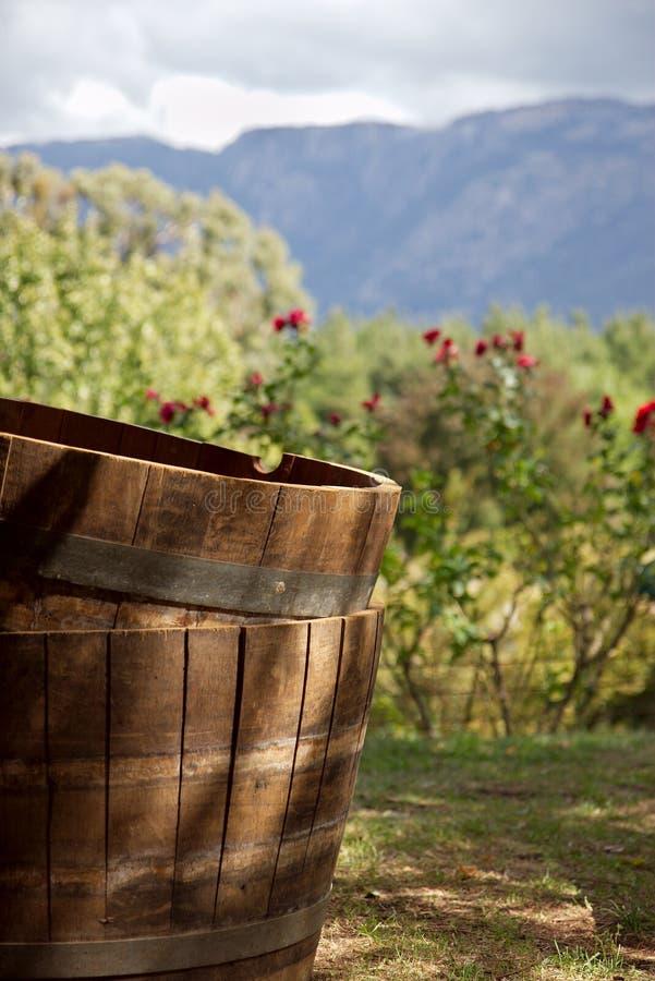 Wijnvatten. stock fotografie
