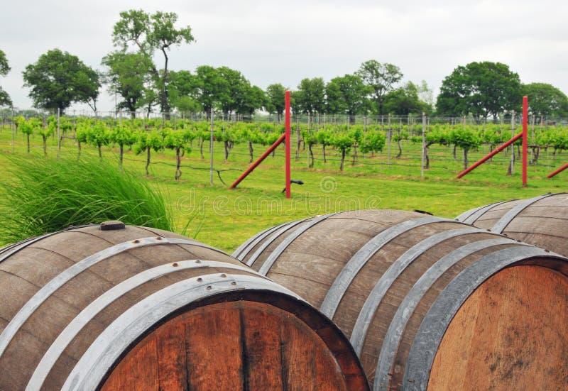 Wijnvatten bij de landelijke Wijngaard stock afbeelding