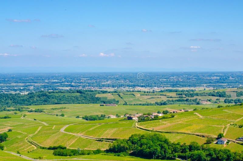 Wijnwerf in Bourgondië, Frankrijk, de zomer royalty-vrije stock afbeeldingen