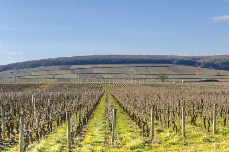 Wijnwerf, Bourgondië, Frankrijk, saone-et-Loire stock afbeeldingen