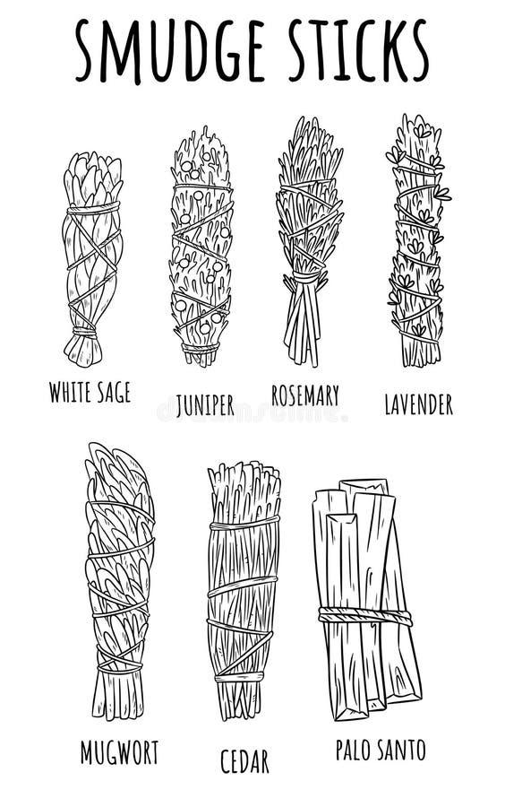 Wijze smudge plakt hand-drawn reeks schetskrabbels De inzameling van kruidbundels vector illustratie