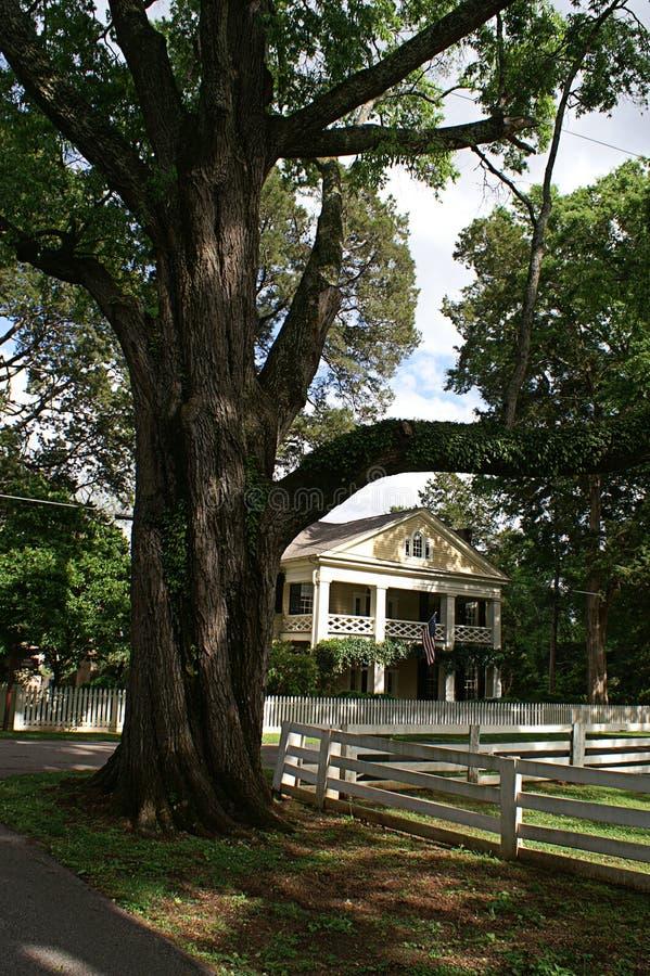 Wiktoriański dom Obramiający Wielkim drzewem zdjęcia royalty free
