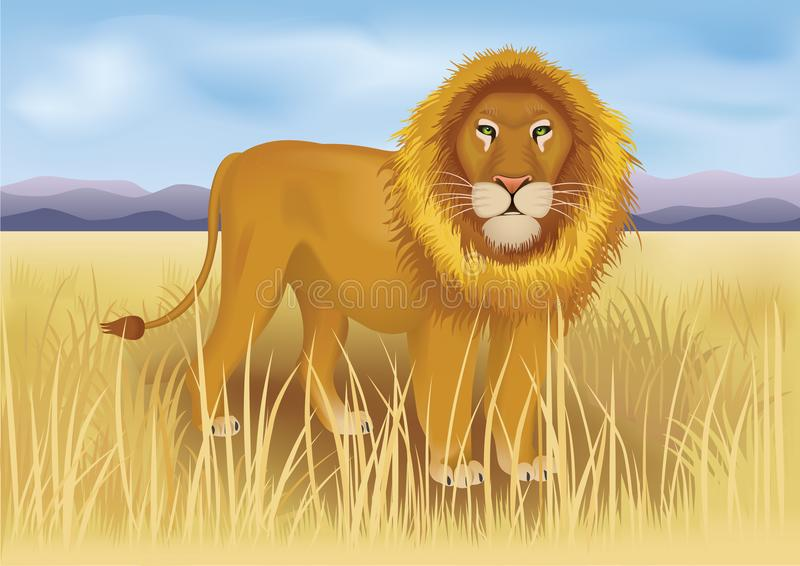 Wild african lion in savanna between mountains stock photo