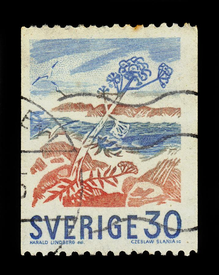 Wild angelica Angelica sylvestris on coast of Sweden. SWEDEN - CIRCA 1967: A stamp printed in Sweden shows wild angelica Angelica sylvestris on coast of Sweden stock photo