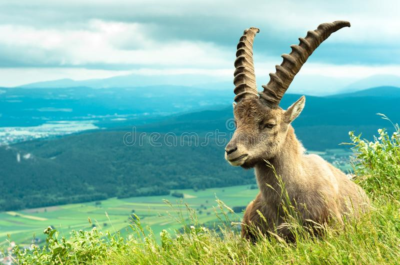 Wild animal stock images