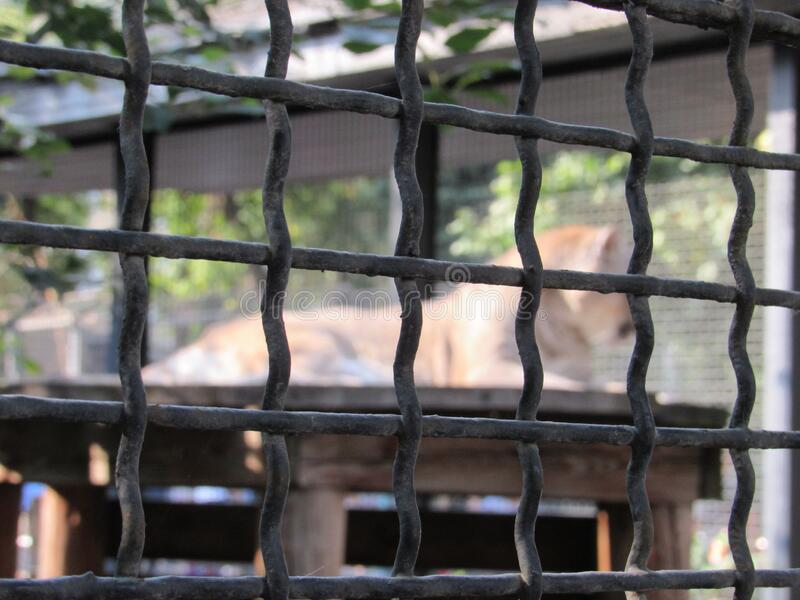 Wild animal in the cage stock photos