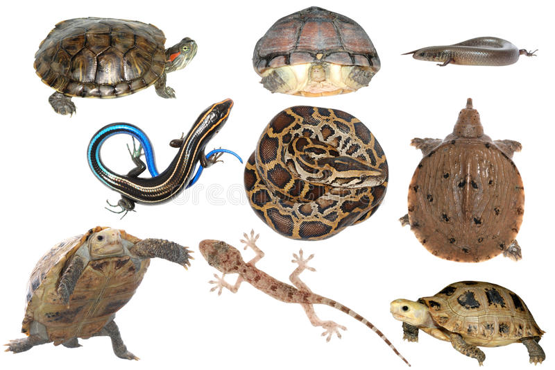 Wild Animal Collection Reptile Stock Photos