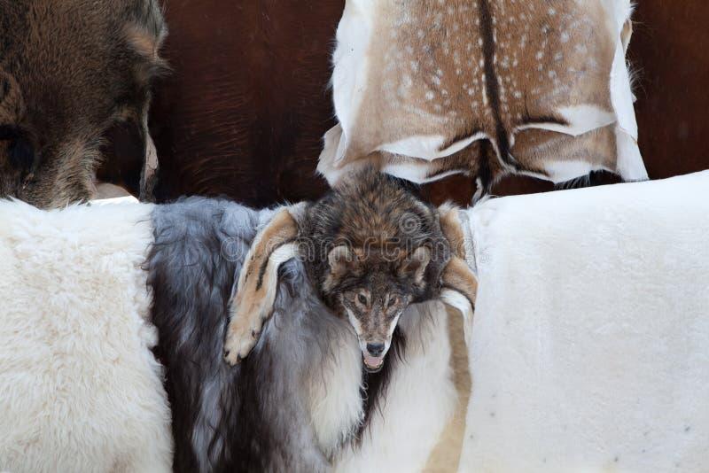 Wild animal fur skins, wolf head at craft market royalty free stock images