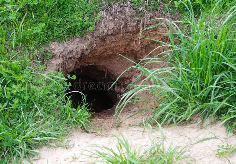 Wild animals burrow royalty free stock photo