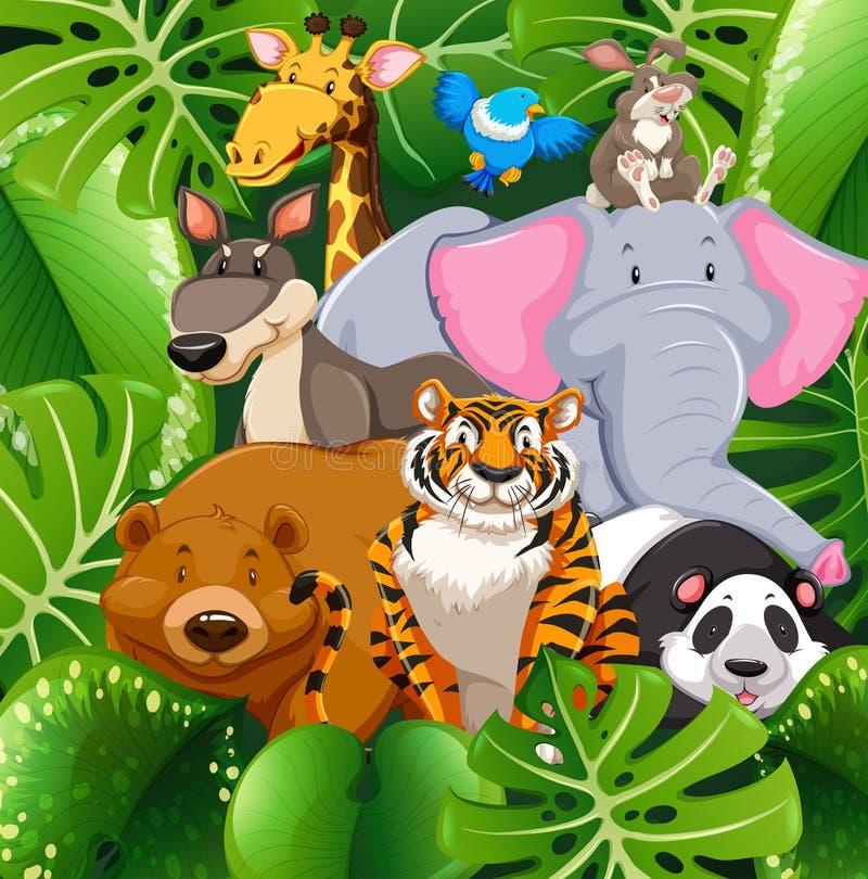 Wild animals in the bush vector illustration