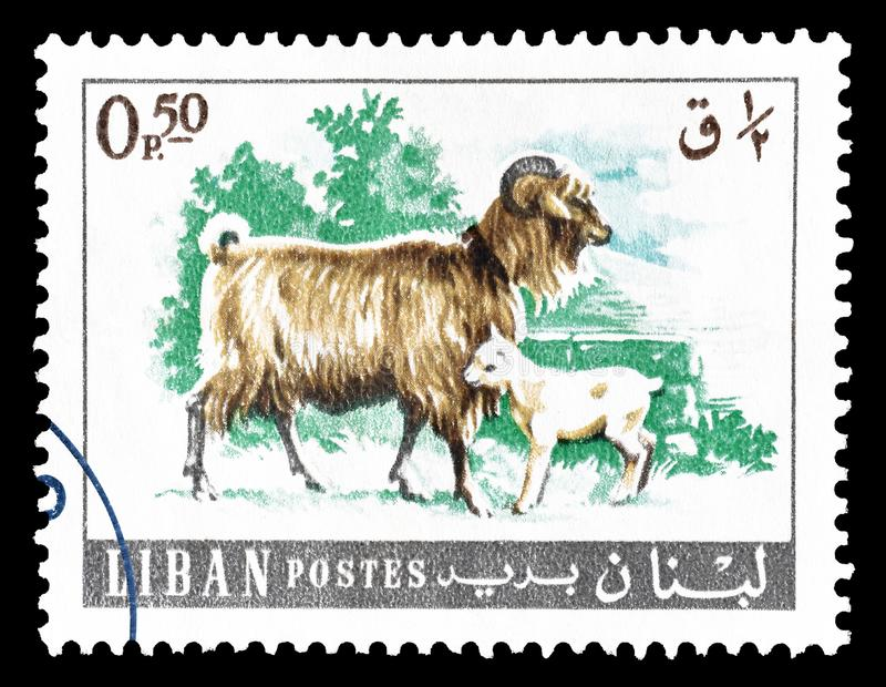 Wild animals on postage stamps stock photo
