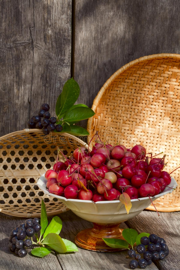 Wild apples and berries aronia royalty free stock image