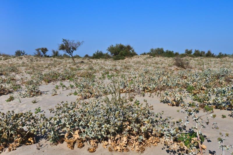 Download Wild beach stock image. Image of nature, beach, evening - 26258067