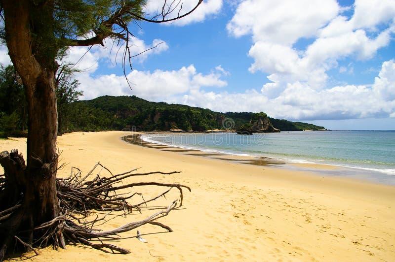 Wild beach stock image