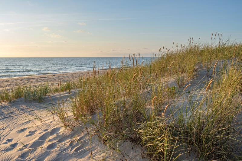 Wild beach Sand dunes and dune grass at sunset royalty free stock images