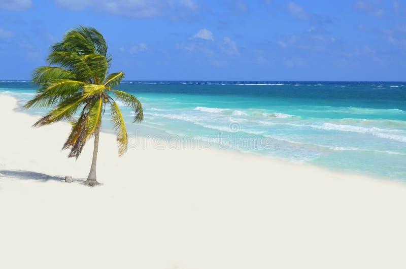 Wild Beach at Tulum royalty free stock photography