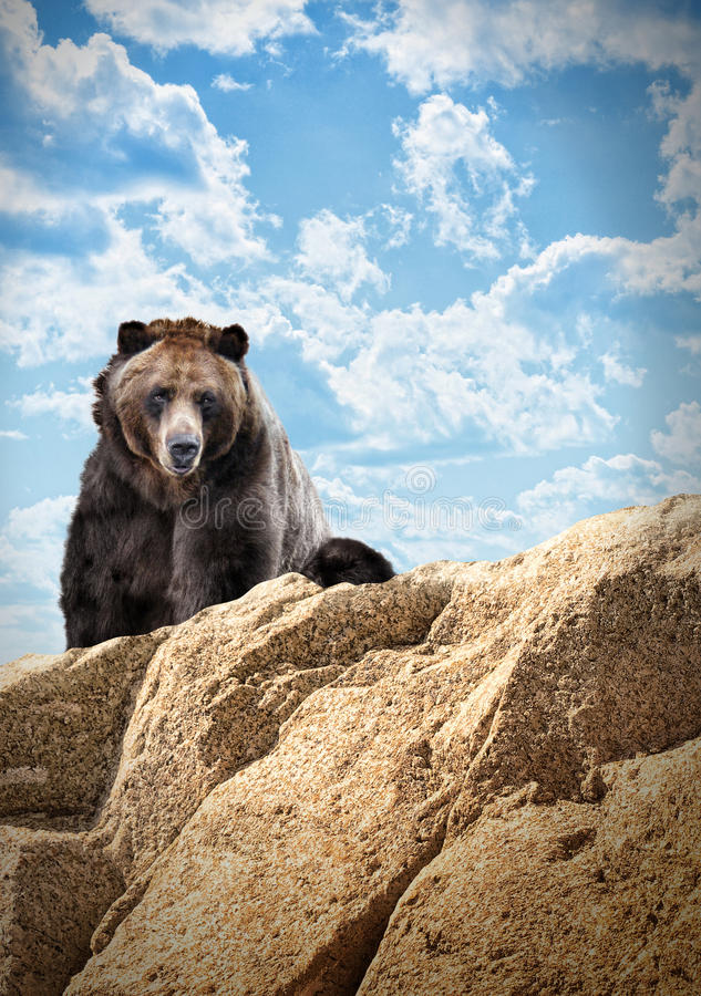 Download Wild Bear Mammal On Cliff With Clouds Stock Image - Image: 28146195