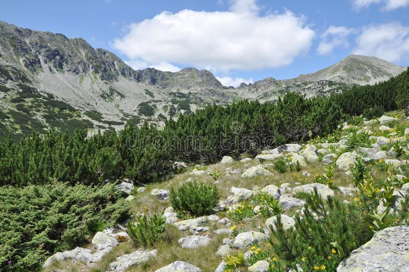 Wild bergträdgård arkivfoto