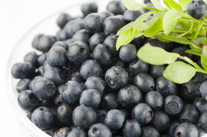 Download Wild berries stock photo. Image of forest, ripe, delicious - 25309398