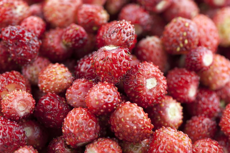 Download Wild berries stock image. Image of sweet, delicious, wild - 25309455