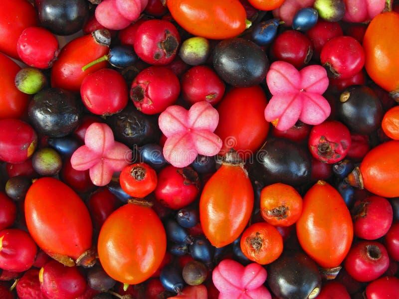 Wild berries background royalty free stock photo