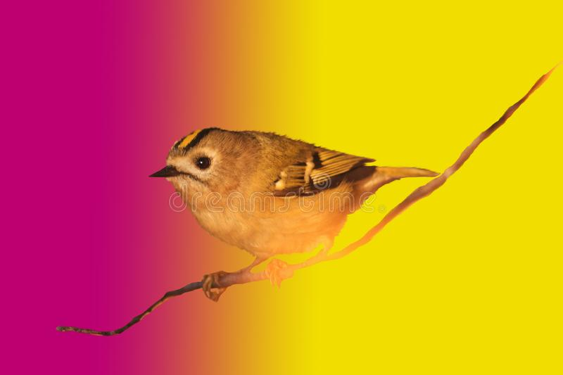 Wild bird on a colorful bright background royalty free stock photography