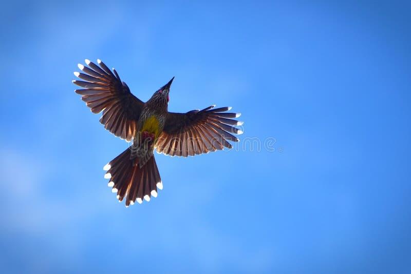 Wild bird flying stock photo