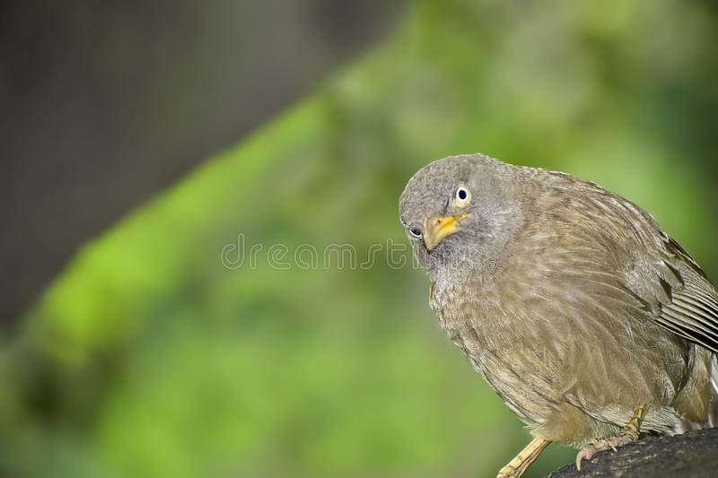 Wild Bird in its natural habitate.India.may 2019 stock photography