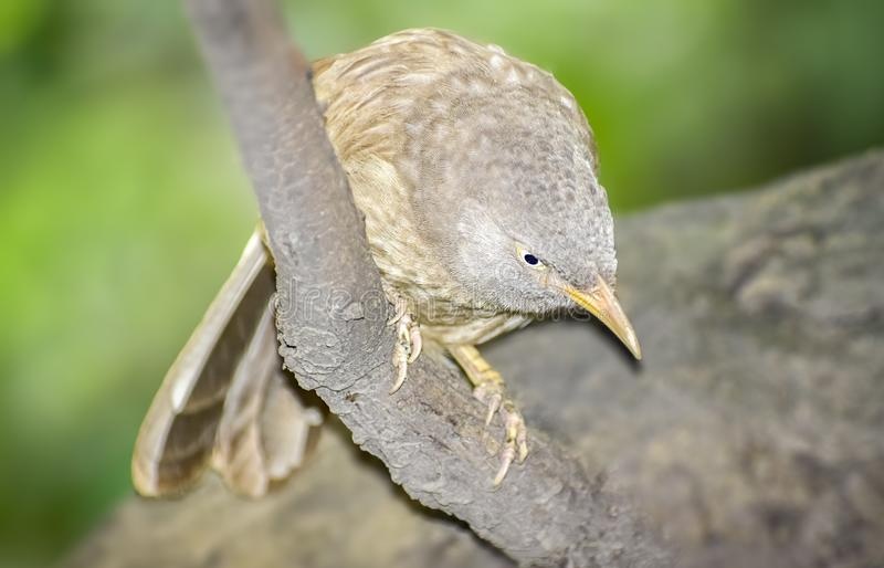Wild Bird in its natural habitate.India.may 2019 royalty free stock photography