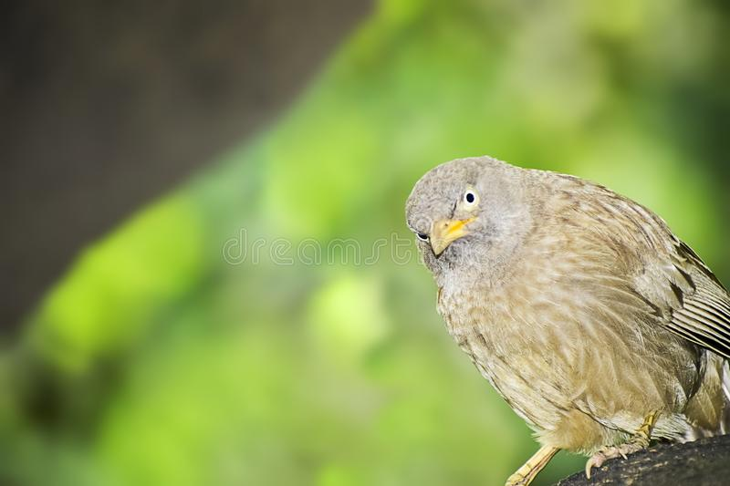 Wild Bird in its natural habitate.India.may 2019 stock image