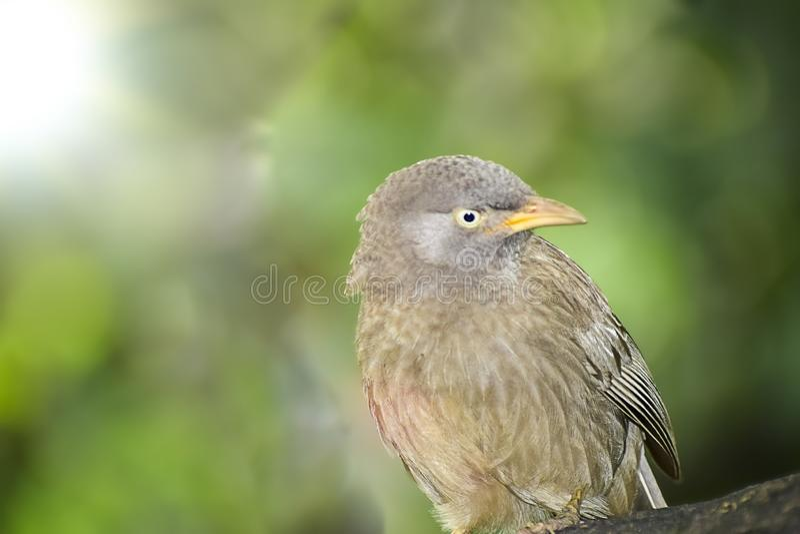 Wild Bird in its natural habitate.India.may 2019 royalty free stock photos