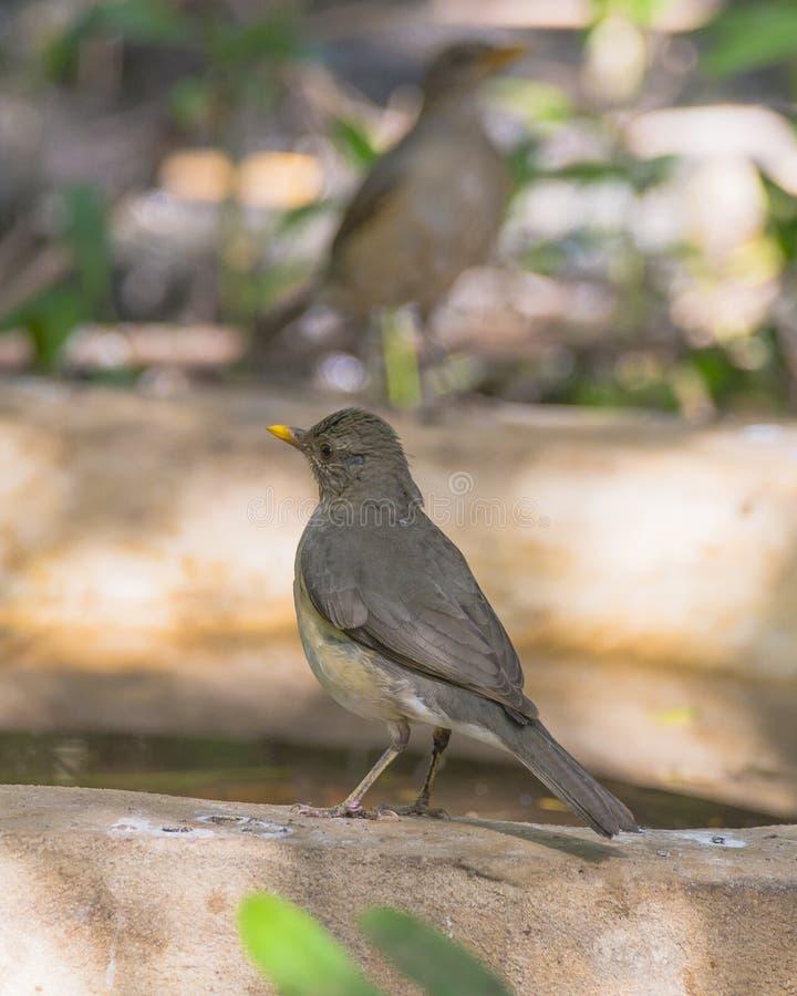 Wild birds stock photography
