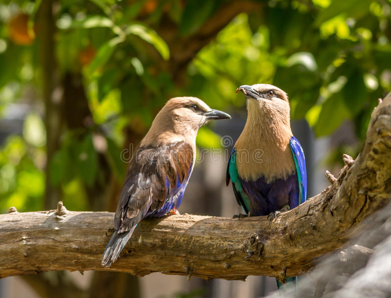 Wild Birds. Colorful birds sitting on a branch stock image