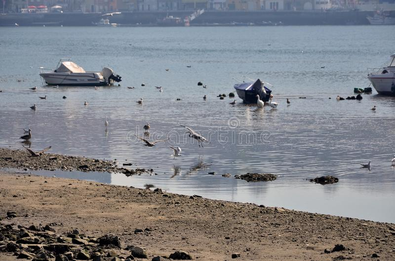 Wild birds and small boats in Douro river stock photo