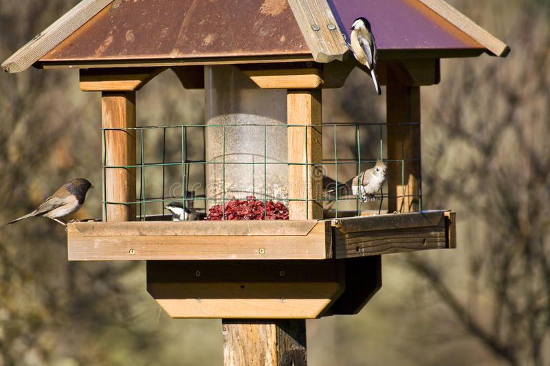 Wild Birds In Winter On Feeder Royalty Free Stock Images