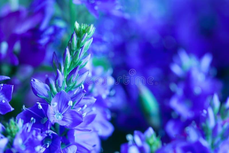 wild blåa blommor royaltyfria foton