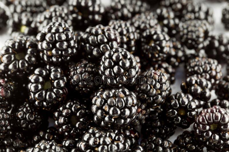 Wild blackberries bio royalty free stock photography