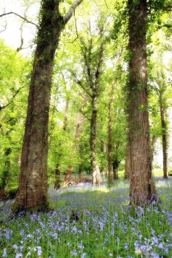 Wild blauw hout royalty-vrije stock afbeeldingen