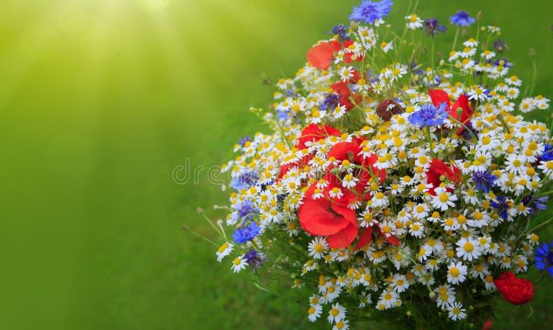 Wild bloemenboeket in helder zonlicht royalty-vrije stock afbeelding