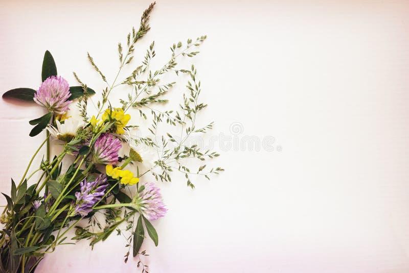 Wild bloemenboeket op wit karton royalty-vrije stock afbeeldingen