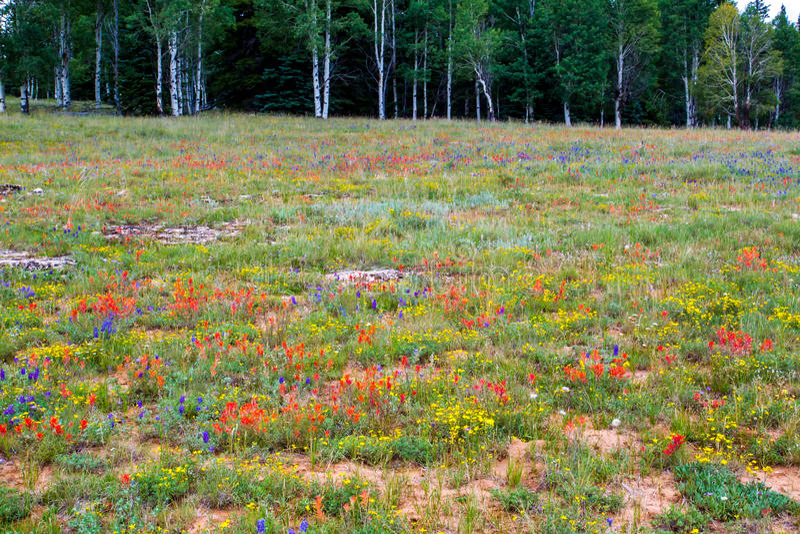 wild blommaäng royaltyfri bild