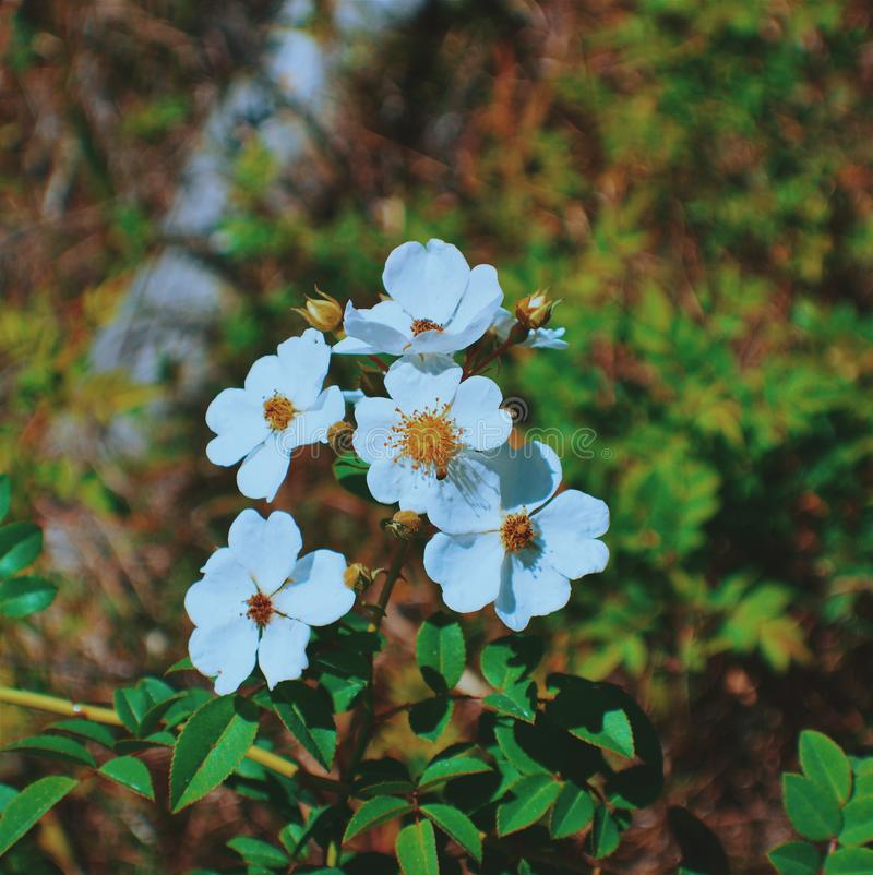 wild blomma arkivfoto