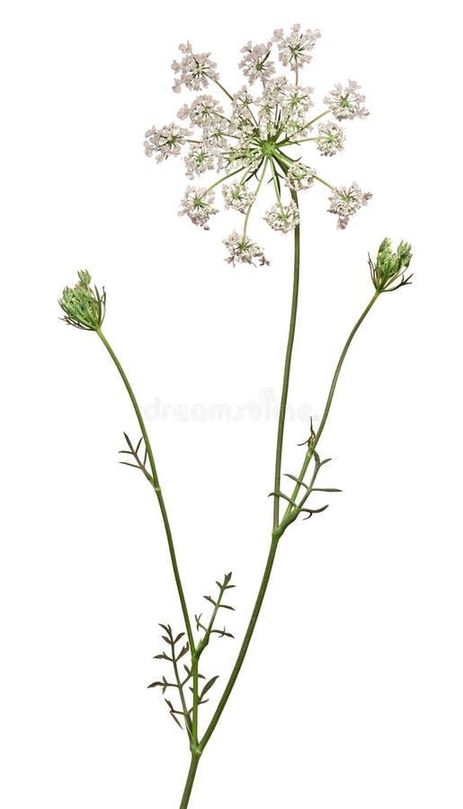 Wild Blomma 8 Royaltyfria Foton
